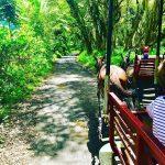 ワイピオ渓谷 ミュールワゴン