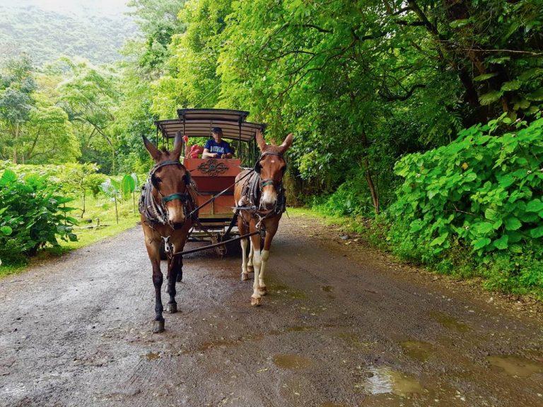 ワイピオ渓谷ミュール ワゴン ツアー