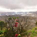 ホロホロ流 貸切チャーター ヒロの街とキラウエア火山